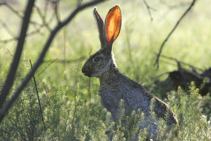 Охота на зайца зимой: Охота на зайца с подхода, охота на зайца троплением, в узерку и из засидки