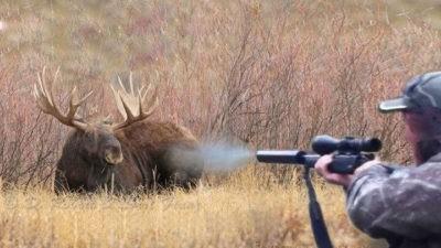 Выстрел в лося