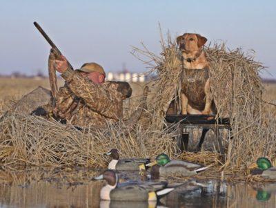 Собака и охотник