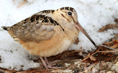 Птица в снегу