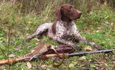 Собака охотника