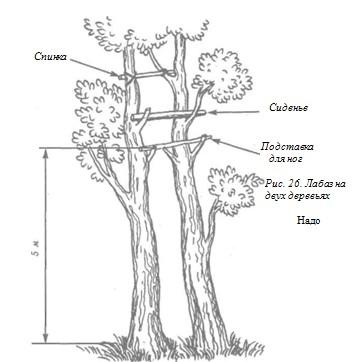 Лабаз на двух деревьях