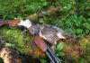 Охота на рябчика фото